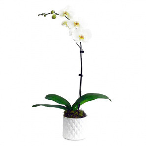The Only Orchid