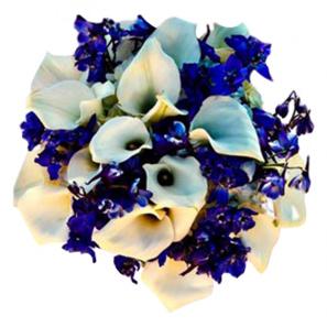 Blue and White Joy