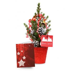 Live Mini Christmas Tree I