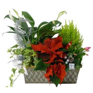 Seasons Greetings Planter Basket buy at Florist